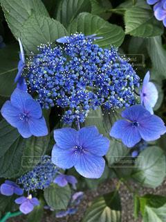 近くの花のアップの写真・画像素材[1302983]