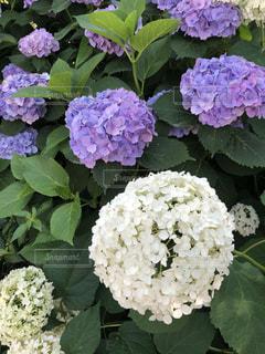 近くの花のアップの写真・画像素材[1302985]