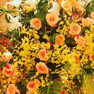 ビタミンカラーのお花の写真・画像素材[1315744]