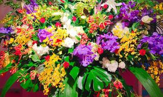 カラフルな花の写真・画像素材[1318643]