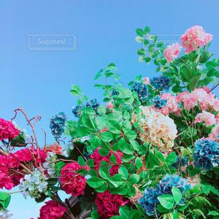 青空と紫陽花の写真・画像素材[1323675]