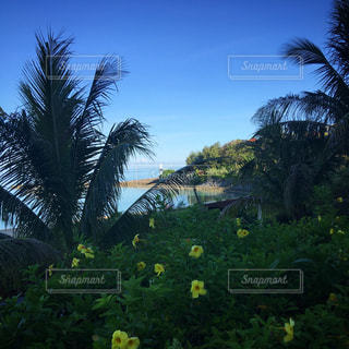 ハイビスカスと海岸の写真・画像素材[1328803]