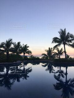 空と水に映るヤシの木の写真・画像素材[1329443]