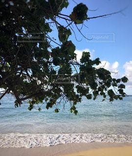 海岸の木陰の写真・画像素材[1344709]