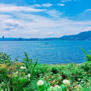 薔薇園からのびわ湖の写真・画像素材[1346276]