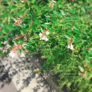 道端に咲く花の写真・画像素材[1349215]