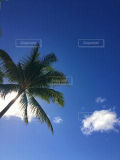 常夏の空の写真・画像素材[1351000]