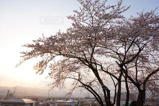 大きな木の写真・画像素材[1302211]