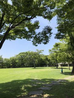 夏の暑い日の写真・画像素材[1302491]