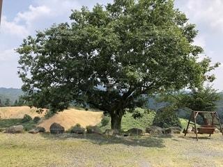 フィールドの大木の写真・画像素材[1303400]