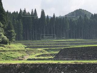 背景の木と大規模なグリーン フィールドの写真・画像素材[1303538]
