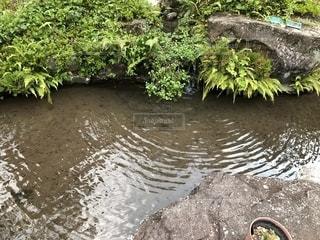 木々 に囲まれた水の体の写真・画像素材[1308361]