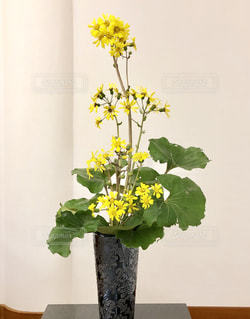 ツワブキの生け花の写真・画像素材[1992058]