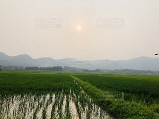 緑豊かな畑に立っている人の写真・画像素材[3708622]