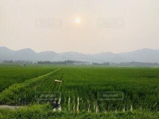 緑豊かな畑に立っている人の写真・画像素材[3708624]