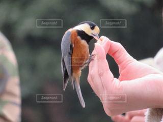 近くに鳥を持っている人のの写真・画像素材[1303317]