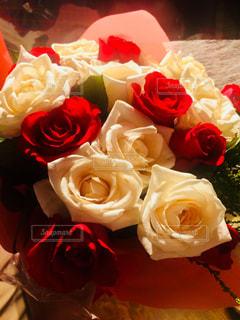 近くの花のアップの写真・画像素材[1303174]