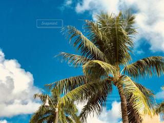 南の島のヤシの木と空の写真・画像素材[1303732]