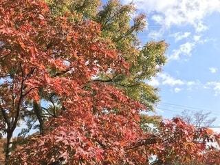 大きな木の写真・画像素材[1679861]