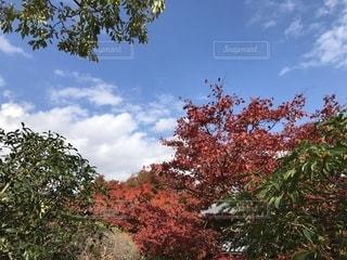 近くの木のアップの写真・画像素材[1679867]