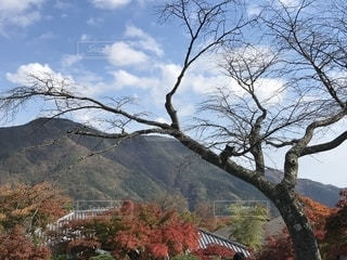 背景の山と木の写真・画像素材[1679876]
