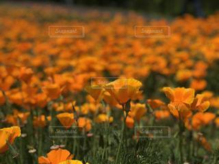 花の写真・画像素材[2394368]