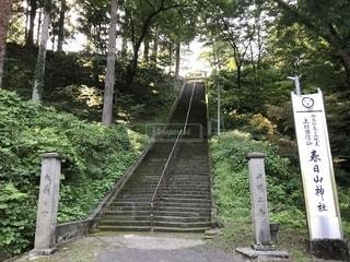 春日山神社の階段の写真・画像素材[2394373]