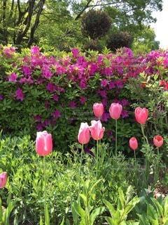花の写真・画像素材[69786]