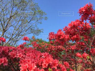 植物にピンクの花の写真・画像素材[1304917]
