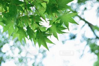 新緑に癒されての写真・画像素材[1408970]