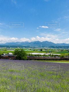 北海道の夏の写真・画像素材[1305322]