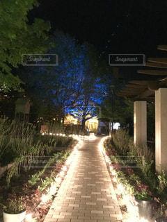 ライトアップされた木の写真・画像素材[1308138]