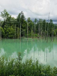 青い池の写真・画像素材[1352864]