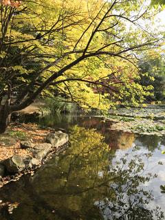 池に映る紅葉の写真・画像素材[1352932]