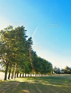 公園の木々と光の写真・画像素材[1376018]