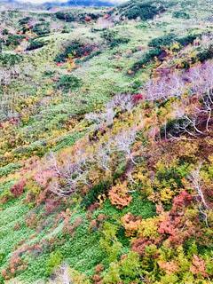 旭岳ロープウェイの写真・画像素材[1496669]