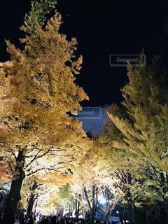 銀杏並木のライトアップの写真・画像素材[1574519]