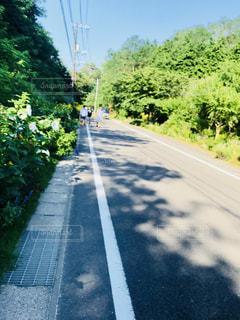 直島のくだり道の写真・画像素材[1309818]
