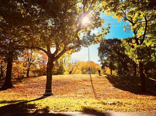 セントラルパークの写真・画像素材[1321845]