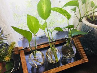 テーブルの上の植物たちの写真・画像素材[1305854]