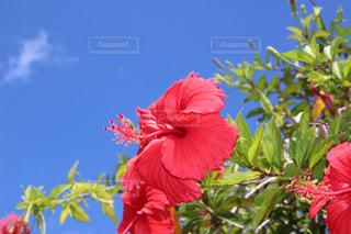 植物にピンクの花の写真・画像素材[1391255]