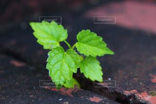 近くの植物のアップの写真・画像素材[1313134]