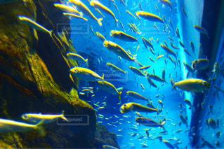 水中の写真・画像素材[1356152]