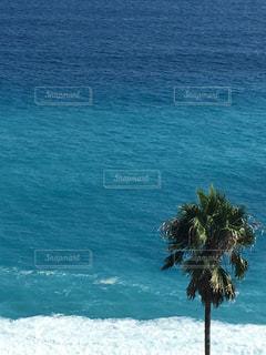 海の横にあるヤシの木の写真・画像素材[1309649]
