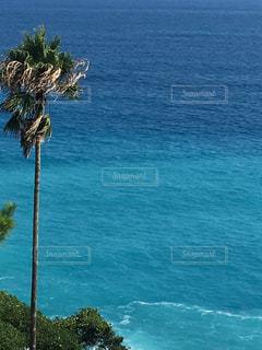 水の体の前でヤシの木の写真・画像素材[1309650]