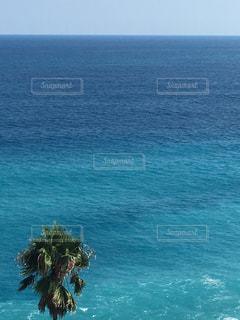 海の横にあるヤシの木の写真・画像素材[1309653]