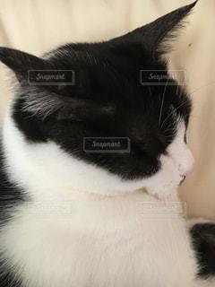 近くに猫のアップの写真・画像素材[1314293]