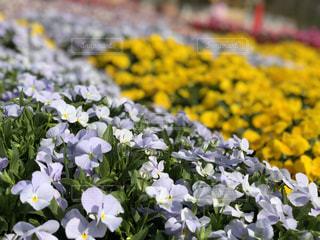 花の写真・画像素材[1308920]
