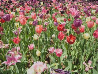 植物にピンクの花の写真・画像素材[1307385]