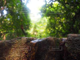 近くの岩のアップの写真・画像素材[1309110]